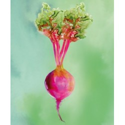 JOSEPH JOSEPH Beetroot Work Top Saver